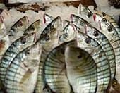 Fresh Fish Display, Agadir, Morocco