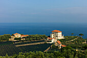 Palazzo and Olive Grove Overlooking Sea, Italy