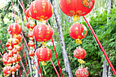 Chinese red lanterns in front of bamboo plants, Phuket, Thailand, Asia