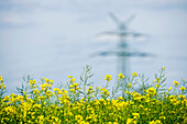 Renewable energies, power pole in a rape field, Schleswig Holstein, Germany, Europe