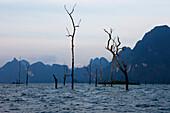 Tote Baumstämme und Karstfelsen am Abend auf dem Stausee des Khao Sok Nationalparks, Khao Sok Nationalpark, Andamanensee, Thailand
