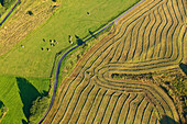 Aerial view of a mowed meadow, Eifel, Rhineland Palatinate, Germany, Europe