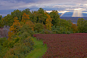 View from the Limberg at forest and Vosges, Autumnal tint, Kaiserstuhl, Oberrheinische Tiefebene, Baden Wuerttemberg, Germany, Europe
