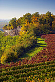 View from the Limberg at forest and river Rhine, Autumnal tint, Kaiserstuhl, Oberrheinische Tiefebene, Baden Wuerttemberg, Germany, Europe