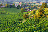 View over vineyards at Burkheim, Summer, Kaiserstuhl, Baden Wuerttemberg, Germany, Europe