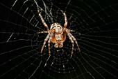 Spider sitting on web