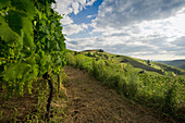 Hills and vineyards under clouded sky, Kaiserstuhl, Baden-Wuerttemberg, Germany, Europe