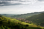 Hills and vineyards around Oberrotweil, Kaiserstuhl, Baden-Wuerttemberg, Germany, Europe