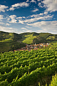 Hills and vineyards around Schelingen, Kaiserstuhl, Baden-Wuerttemberg, Germany, Europe