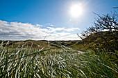 Grassy landscape, natural reserve, Norderney, East Frisian Islands, Lower Saxony, Germany