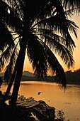 Palm tree and boats at Mekong river after sunset, Luang Prabang, Laos