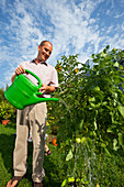 Man watering tomatoes with a watering can, Urban Gardening, Urban Farming, Stuttgart, Baden Wurttemberg, Germany