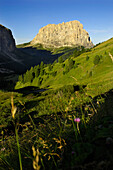 Leaves of grass, Sass Ciampac, Sellastock, Langkofel, Ladin Valley, UNESCO world natural heritage, South Tyrol, Trentino-Alto Adige, Italy