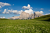 Flower meadow in valley, Langkofel, Plattkofel, Seiser Alm, Valle Isarco, South Tyrol, Trentino-Alto Adige, Italy