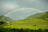 Rainbow above vineyards, Obermais, Merano, Alto Adige, South Tyrol, Italy, Europe