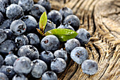 Close up of blueberries, Alto Adige, South Tyrol, Italy, Europe