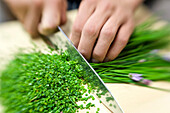 A person cutting chives, Alto Adige, South Tyrol, Italy, Europe