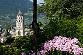 Blick von der Tappeiner Promenade auf Kirchturm im Sonnenlicht, Meran, Alto Adige, Südtirol, Italien, Europa