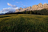 Alpine meadow in blossom, Rosengarten in the background, Dolomites, Alto Adige, South Tyrol, Italy