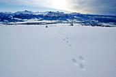 Berglandschaft mit Spuren im Schnee, Dolomiten, Südtirol, Alto Adige, Italien, Europa