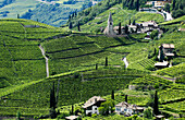Vineyard and houses in the sunlight, Bolzano Rentsch, Dolomites, South Tyrol, Alto Adige, Italy, Europe
