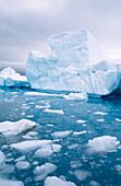 Iceberg floating in the ocean, Paradise Harbour, Antarctic Peninsula, Antarctica