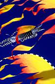 Kite Festivals, Adelaide, Australia