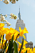 Views of the Empire State Building and flowers in springtime, Manhattan, New York, USA