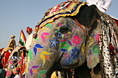 At Elephant Festival, Jaipur, Capital Of Rajasthan, India. Annual Event Held At Chaughan Stadium Within The Old Walled Centre Of Jaipur, Jaipur, Rajasthan State, India. Asia.