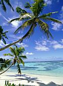 Palm tree on tropical beach in Anse Sourse D'Argent, Anse Sourse D'Argent, La Digue, The Seychelles