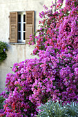 France, Upper Corsica, Cap Corse, Nonza
