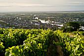 France, Burgundy, Yonne, Joigny, general view, vineyards