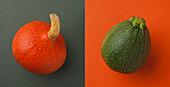 Close-up of chestnut pumpkin and zucchini