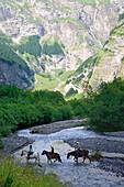 France, Rhone-Alpes, Haute Savoie (74), Sixt-fer-a-Cheval, Fer a Cheval amphitheatre