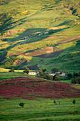Algeria, Kabylia, landscape near Djemila