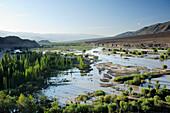 Marsh land in valley of Indus near Leh, Leh, valley of Indus, Ladakh, Jammu and Kashmir, India