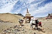 Pack animals passing stupa, descent from pass Sirsir La to Photoksar, Zanskar Range Traverse, Zanskar Range, Zanskar, Ladakh, India