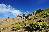 Meager plants in desert climate, Sengi La, Sengge La, Zanskar Range Traverse, Zanskar Range, Zanskar, Ladakh, India