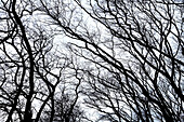 Bare Tree Branches Against Sky