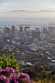 View from Signal Hill onto Cape Town, Cape Town, Western Cape, South Africa