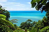 Rainforest at Cape Tribulation, Pacific Ocean, North Queensland, Australia