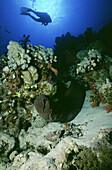 Scuba diver swimming near coral reef, The Red Sea, Egypt