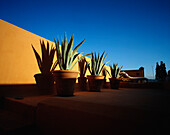 Aloe plants and sun lounger on a roof terrace, Marrakech, Morocco