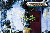 Doorway with tiled roof and plant, Georgetown,  Pulau Pinang (Penang), Malaysia