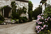 Overgrown facades of houses and flowers, Devon, Southern England, Great Britain, Europe