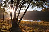Backlit tree at Mosenmaar, crater lake on Mosenberg hill, at Bettenfeld, near Daun, Eifel, Rhineland-Palatinate, Germany, Europe