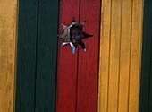 Boy looking through hole in wall, Pinneys Beach, Nevis