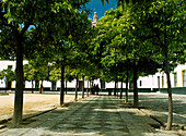 Treelined footpath in courtyard, Seville, Andalucia, Spain