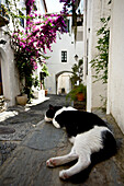 Cat resting on step, Cadaques, Girona, Catalonia, Spain