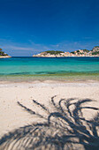 Shadow of palm tree on Puerto de Soller beach, Majorca, Ballearic Islands, Spain
